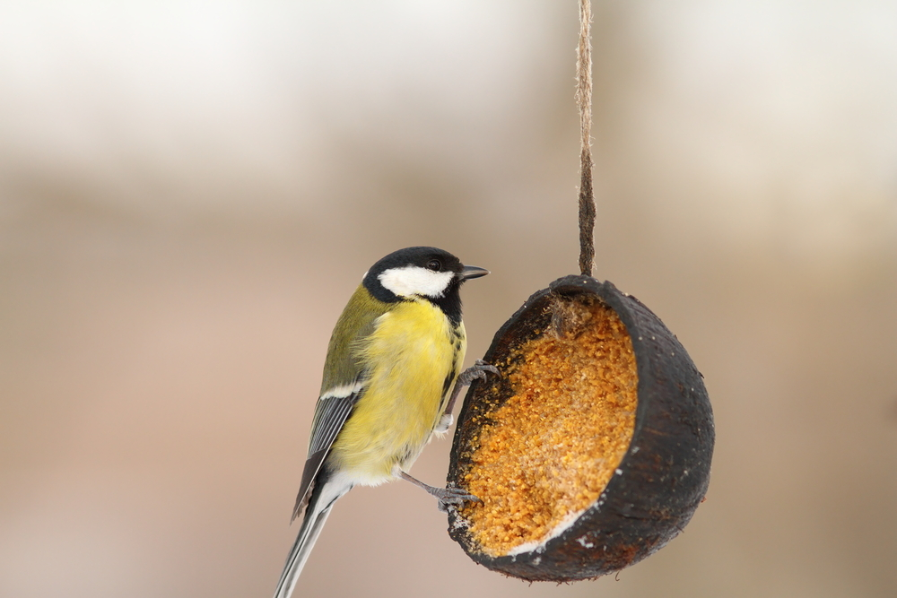 BIC ptáky