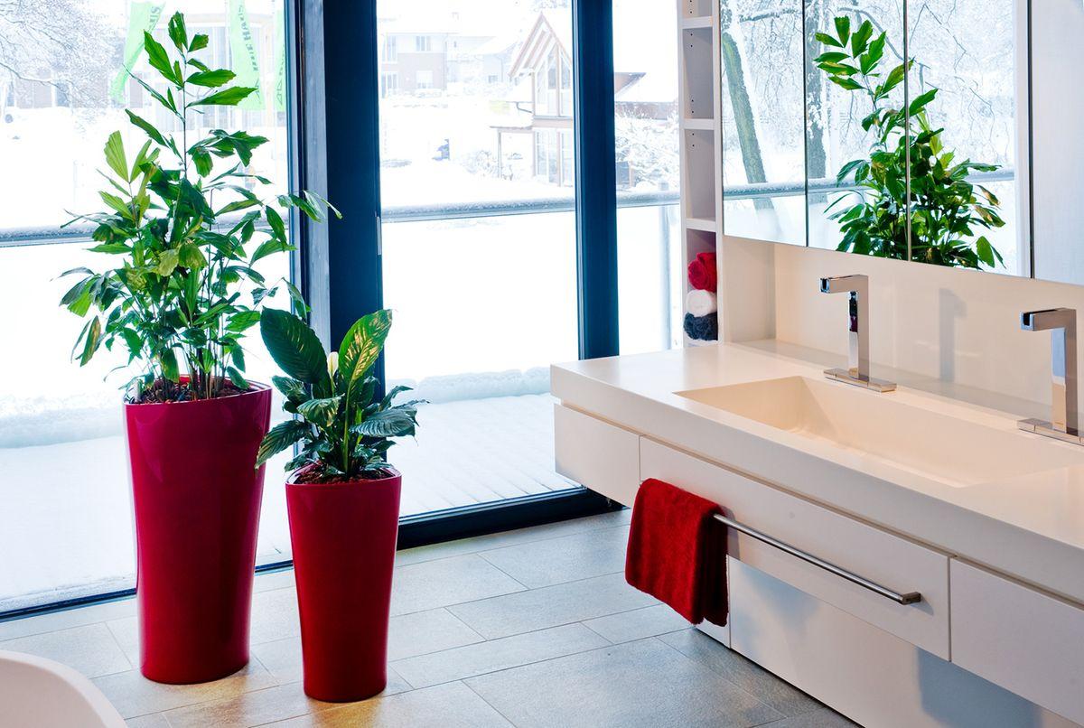 rostliny jako dominanta bytu tyhle pokojovky nep ehl dnete pro eny. Black Bedroom Furniture Sets. Home Design Ideas
